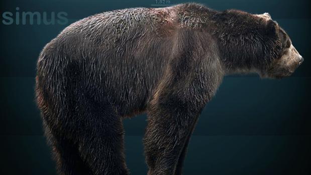 Restauración de Arctodus simus, el oso de la Edad de Hielo, según los fósiles encontrados de esta especie