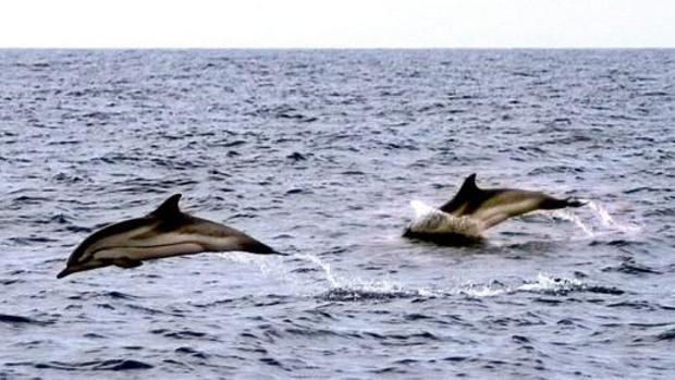 Delfines cerca de las costas valencianas