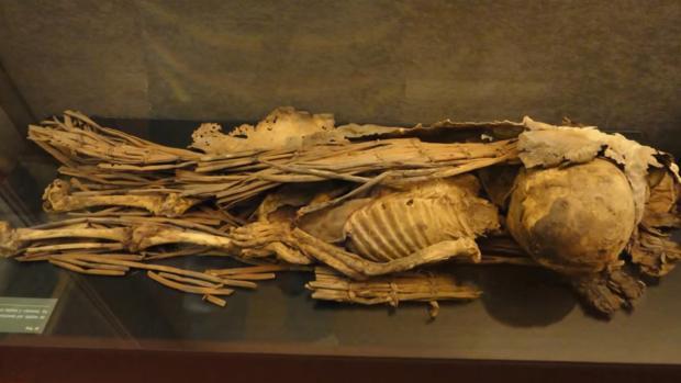 Momia de un menor encontrada en Artenara y expuesta en el Museo Canario