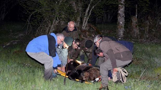 Así fue el rescate del oso