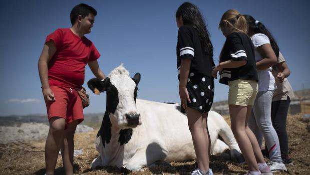 Varios niños se divierten con una de las vacas de La Granja