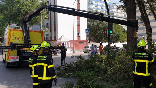 Bomberos interviene para retirar el árbol de grandes dimensiones