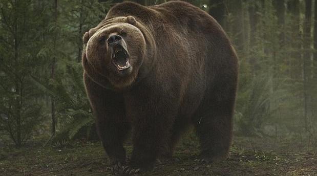 Fotograma de la película «Grizzly»
